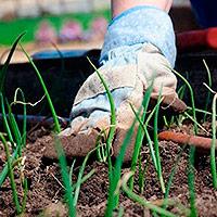 Отзывы о технике для сада иогорода